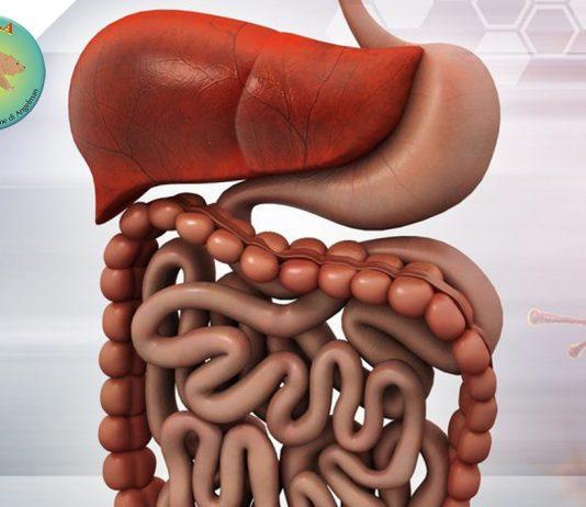 Prevalenza Sintomi Gastrointestinali nella Sindrome di Angelman | OR.S.A. Organizzazione Sindrome di Angelman