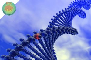 Nuova Compagnia Biotech   OR.S.A. Organizzazione Sindrome di Angelman